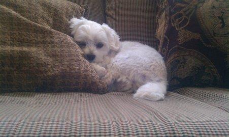 Sleepy Puppy 🐶
